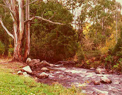 Ovens River - near Bright - Victoria